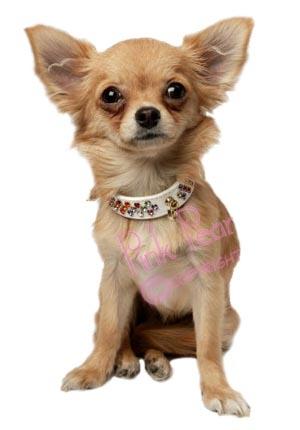 crystal doggie collar