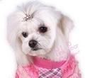 doggie crown - pink